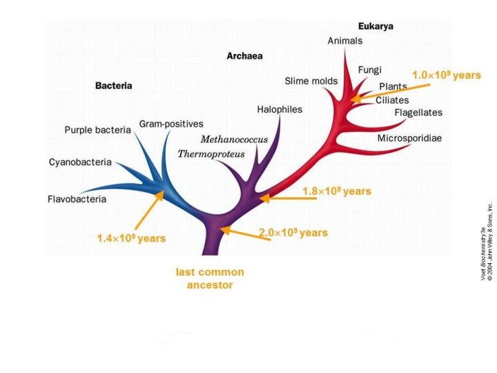 the phylogenetic tree of life Abstract molecular phylogenetics has revolutionized our knowledge of the eukaryotic tree of life with the advent of genomics, a new discipline of phylogenetics has emerged: phylogenomics.