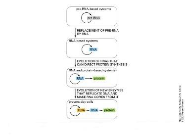 Slide 14 RNA world hypothesis