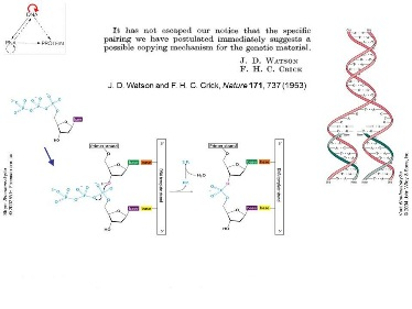 Slide 3	DNA replication by templated polymerisation