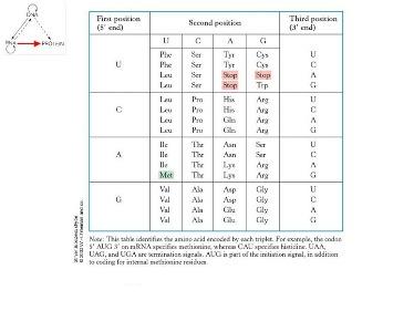 Slide 6The genetic code
