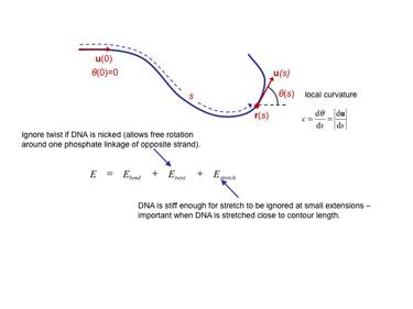 Slide 11 The Kratky-Porod worm-like chain model