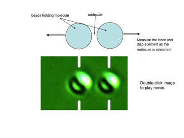 Slide 2 Measuring the force-extension curve of DNA with optical tweezers