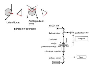Slide 12 Basics of optical tweezers.
