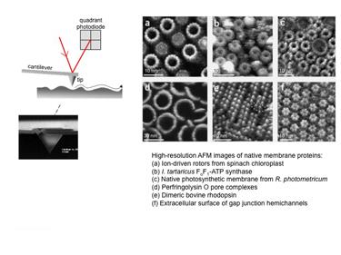 Slide 15 Atomic force microscopy (AFM)