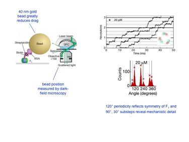 Slide 3Stepping rotation of F1-ATPase