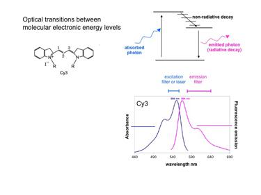 Slide 4Fluorescence microscopy – the basics.