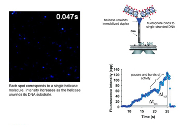 Slide 6Helicase activity measured by TIRF microscopy.