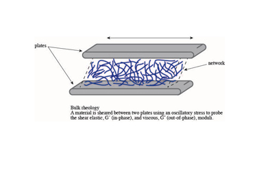 Slide 2	Bulk rheology. Here the material between the plates is typically a tissue, composed of many cells