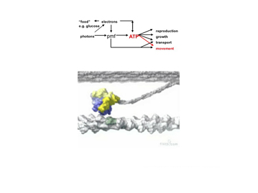 Slide 3Skeletal muscle actomyosin.