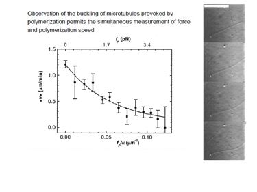 Slide 8	Measurements of force and polymerisation speed during the buckling of microtubules