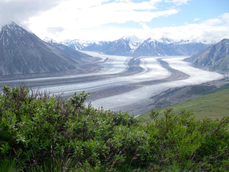 Shrub Hub assesses growth in tundra ecosystems ...