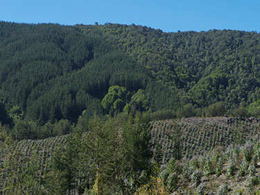Chile forest