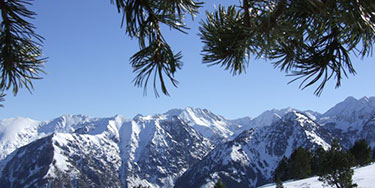 <i>Pinus mugo</i> in the French Pyrenees
