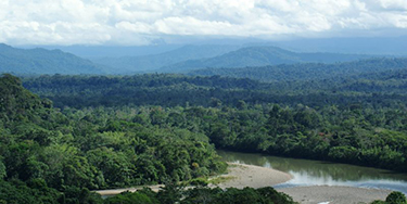 Amazonia's forests