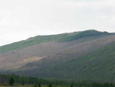 Burned area in the Tuvan mountains