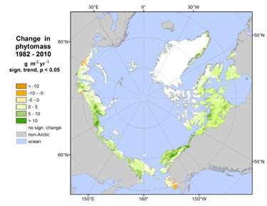 Change in Arctic phytomass