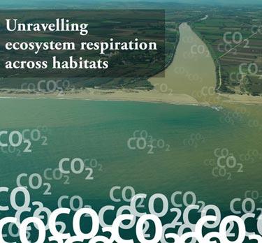 Ecosystem respiration