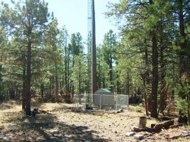 Forest measurement