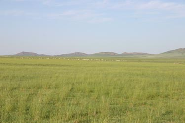 Desert steppe