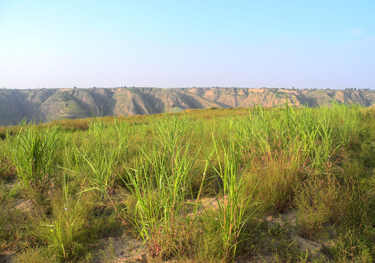 Experimental field in the Loess Plateau