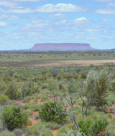 Greening dryland