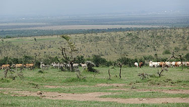 Livestock and wildlife