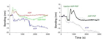 Nanomechanical detection of the ATP hydrolysis and blockade