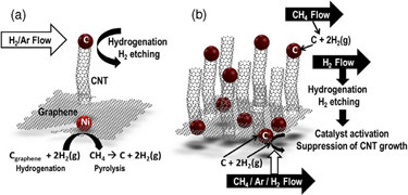 Schematic: CNTs growing directly out-of-plane from a graphene layer