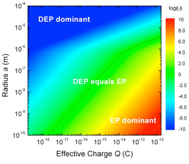 Relative strength of EP and DEP effects