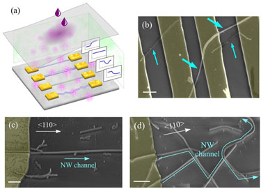 Table-top demonstrator: array of nanowire-based sensors