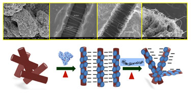 Temperature-dependent assembly of BSA-adsorbed carbon nanotubes