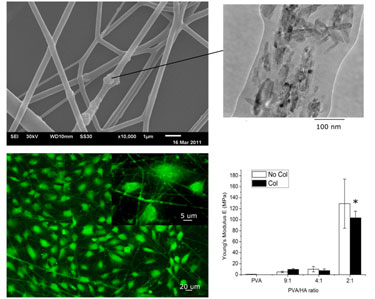 Matrix material: electrospun polyvinyl alcohol–collagen–hydroxyapatite nanofibres