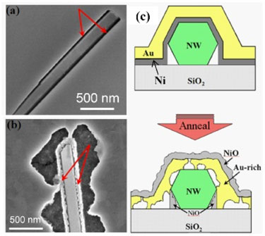 Void formation upon annealing for NiAu contacts to GaN nanowires