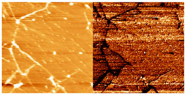 Conductive AFM images containing grain boundaries and wrinkles
