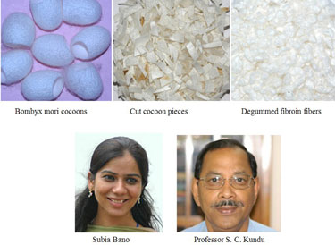 Processing and development of silk protein fibres