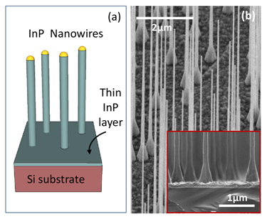 InP nanowire growth on Si substrate