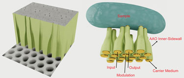Fan-out platform: curved anodic alumina nanochannels