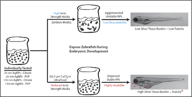 Testing AgNP toxicity