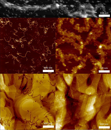 Biomolecular fibres