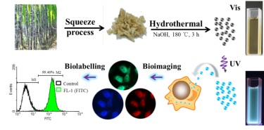 Highly fluorescent CDs derived from bagasse