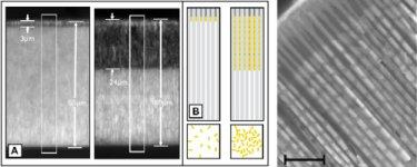 Membrane template