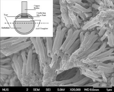Sensing structure: conducting polymer nanotubes