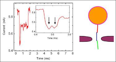 Nanopore experiment: trimer complex translocation event