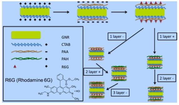 پوشش دهی GNR و پیچاندن R6G در انواع مختلفی از لایههای پلیمری