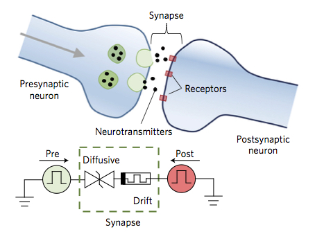 Memristor behaves like a synapse nanotechweb memristor mimics a synapse ccuart Image collections