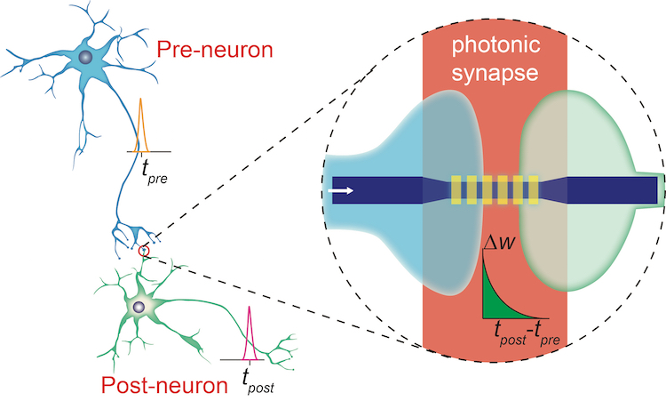 Phase change material makes first on chip photonic synapse a photonic synapse mimicking the biological synapse ccuart Image collections