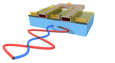 The graphene amplifier