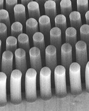 Micrograph of carbon nanotube posts