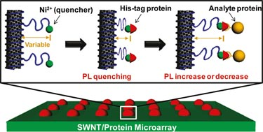 Label-free detection of protein-protein interactions