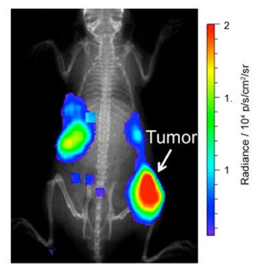 Imaging tumours in mice